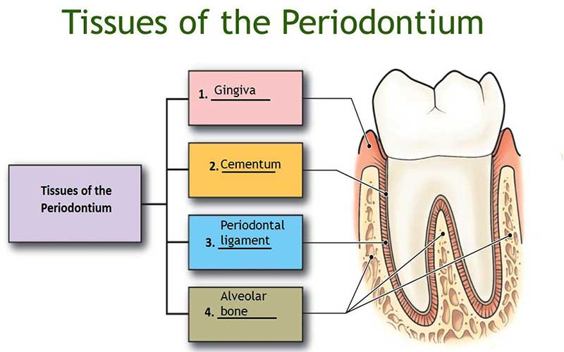 Periodontists in Barsha